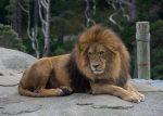 Lion Bev Dunbar Maths Matters