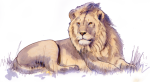 Lion  - wild animal John Duffield duffield-design