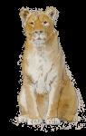 Lioness - John Duffield duffield-design