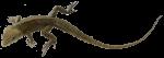 Lizard Bev Dunbar Maths Matters