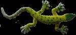 Long green toy lizard - Bev Dunbar Maths Matters
