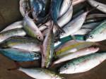 Lots of fish Bev Dunbar Maths Matters