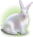 Lucky White Rabbit - Chance - John Duffield duffield-design