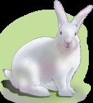 Lucky White Rabbit - John Duffield duffield-design