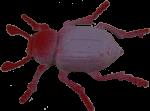 Mauve Beetle Bev Dunbar Maths Matters