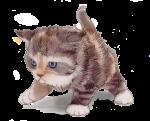 Max Kitten 2 weeks 225 grams - John Duffield duffield-design