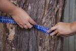 Measure the circumference of a tree Bev Dunbar Maths Matters