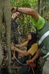 Measuring an elephants Trunk HUTAN-Jamil Sinyor Sabah