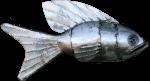 Metal Fish 3 Bev Dunbar Maths Matters