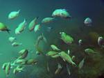 Counting - More than 40 fish Bev Dunbar Maths Matters