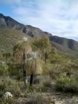 Mt Bluff 1099 m Sterling Ranges WA Bev Dunbar Maths Matters