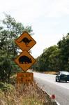 Next 10 km Kangaroo Wombat Sign Bev Dunbar Maths Matters