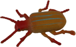 Orange Beetle Bev Dunbar Maths Matters