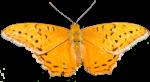 Orange Butterfly (Symmetry) Bev Dunbar Maths Matters