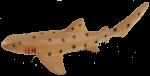 Orange Shark Bev Dunbar Maths Matters