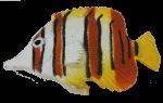 Orange White Fish Bev Dunbar Maths Matters