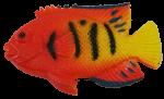 Orange Yellow Fish Bev Dunbar Maths Matters