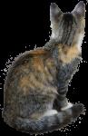 PK Kitten - pet - Bev Dunbar Maths Matters