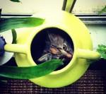PK Kittens favourite circle Bev Dunbar Maths Matters