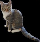 PK kitten - 14 weeks - Bev Dunbar Maths Matters