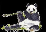 Panda - John Duffield duffield-design