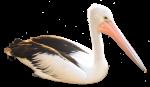 Pelican Bev Dunbar Maths Matters