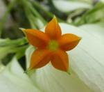 Pentagonal Flower Bali Bev Dunbar Maths Matters