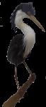 Pied Heron Bev Dunbar Maths Matters