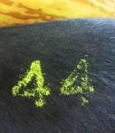 Pig 44 at the Show Bev Dunbar Maths Matters
