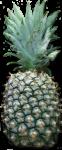 Pineapple Bev Dunbar Maths Matters