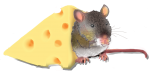Position Mouse - Beside cheese - John Duffield duffield-design
