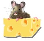 Position Mouse - On Top of Cheese - John Duffield duffield-design