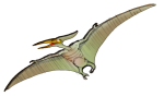 Pterodactyl 12 m wingspan - John Duffield duffield-design