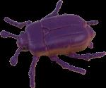 Purple Beetle Bev Dunbar Maths Matters