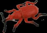 Red Beetle Bev Dunbar Maths Matters