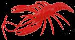 Red Lobster Bev Dunbar Maths Matters