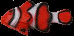 Red White Fish Bev Dunbar Maths Matters