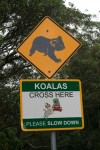 Road Sign Koalas Cross Here Bev Dunbar Maths Matters