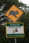 Road Sign Koalas Cross Here Bev Dunbar Maths Matters