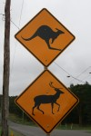 Road Sign Watch for Kangaroos and Deer Bev Dunbar Maths Matters