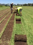 Rolling up square metres of turf Bev Dunbar Maths Matters