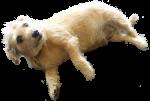 Scruffy dog - pet - Bev Dunbar Maths Matters