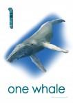 Sea Creatures 1 Whale Poster Bev Dunbar Maths Matters