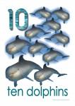 Sea Creatures 10 Dolphins Poster Bev Dunbar Maths Matters