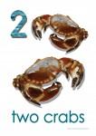 Sea Creatures 2 Crabs Poster Bev Dunbar Maths Matters