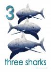 Sea Creatures 3 Sharks Poster Bev Dunbar Maths Matters