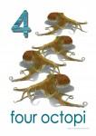 Sea Creatures 4 Octopi Bev Dunbar Maths Matters