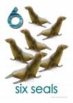 Sea Creatures 6 Seals Poster Bev Dunbar Maths Matters