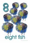 Sea Creatures 8 Fish Poster Bev Dunbar Maths Matters