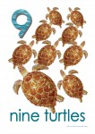 Sea Creatures 9 Turtles Poster Bev Dunbar Maths Matters